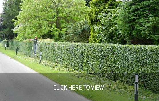More Photos – Hedge Cutting