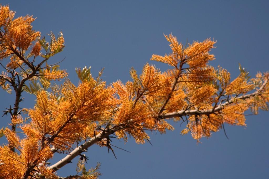 treepruningsydney