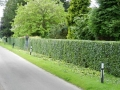 case-study-hedge-cutting